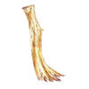 https://www.eldarya.it/assets/img/item/player/icon/0fbdbb44417f311313617a31ac15f6d4.png