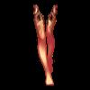 https://www.eldarya.it/assets/img/item/player/icon/2e90f8c37e1e3587f2bd6e545404baf4.png