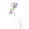 https://www.eldarya.it/assets/img/item/player/icon/4ca6400f39ad615cb4c252c53b84d3ab.png