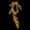 https://www.eldarya.it/assets/img/item/player/icon/b1645c6ec732354120d91a2566df818b~1530628120.png
